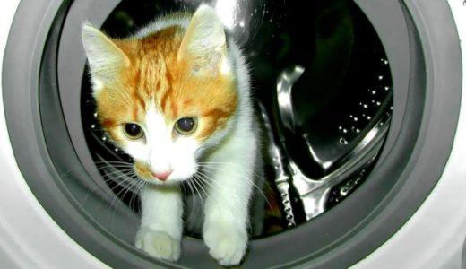 二人暮らしにおすすめの洗濯機10選!7キロ他、サイズや容量も解説
