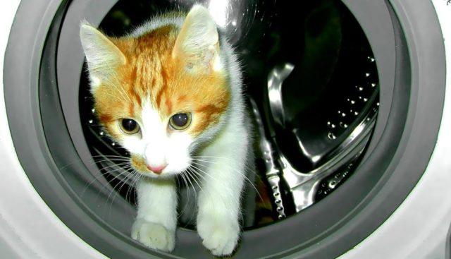 洗濯機に入る猫
