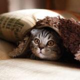 枕とねこちゃん