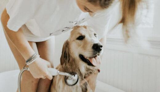 犬用シャンプーのおすすめ人気ランキング10選。頻度なども解説