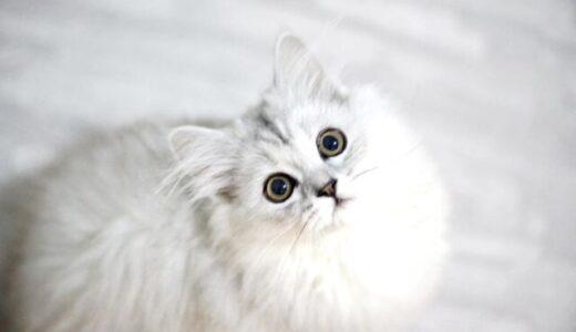 【2月22日は猫の日】猫好きさん必見のかわいい猫グッズをご紹介