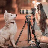 犬を撮影する女の子