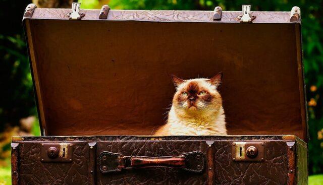 猫と旅行鞄