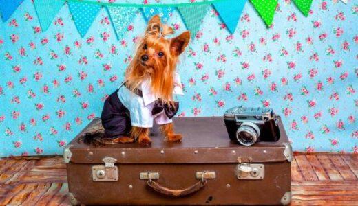 【国内】ペットと一緒に泊まれる宿・ペットと楽しむお出かけ特集!おすすめ14選【全国版】