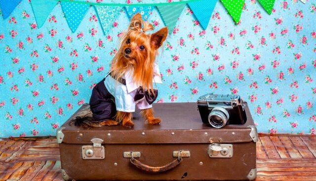 犬と旅行鞄