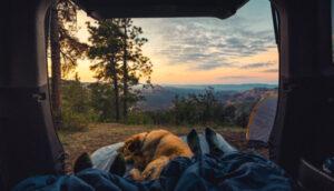 テントの中、足元で寝ている犬