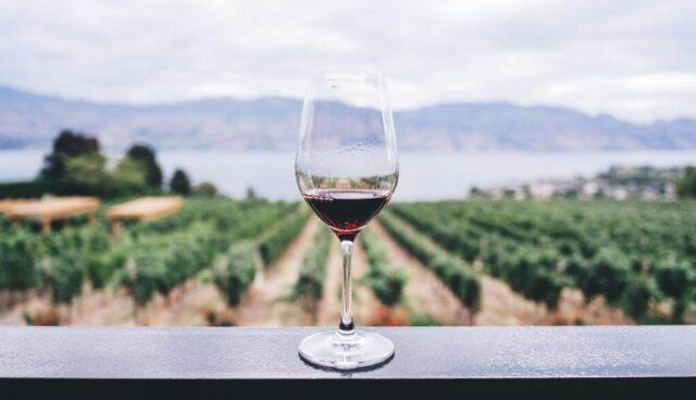 ワイングラスの向こうに畑
